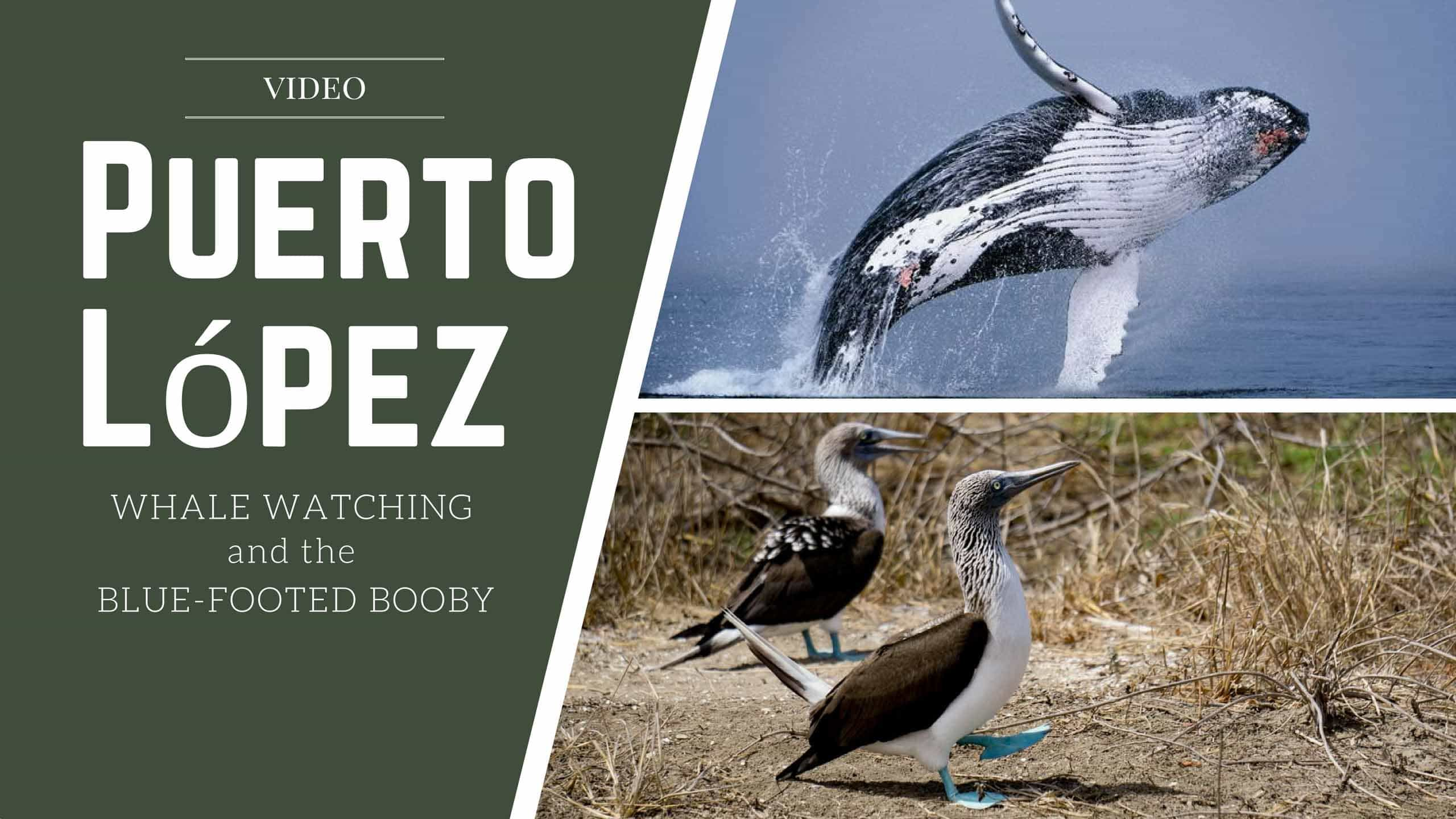 Puerto López: Whale Watching And The Blue-Footed Booby