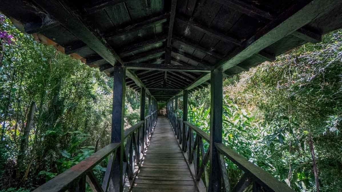view of a bridge from the botanical gardens in Jerico Colombia