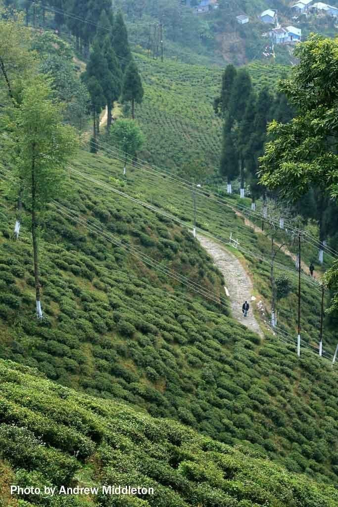 Picture of Darjeeling, West Bengal, India.